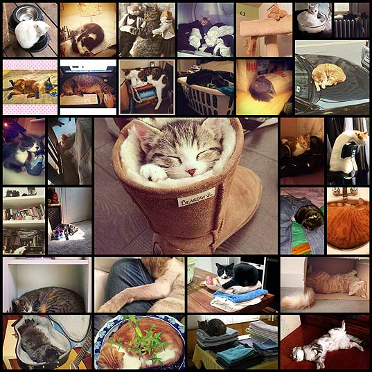 places-cats-would-rather-sleep-than-your-lap28