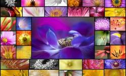 55-beautiful-macro-flower-pictures