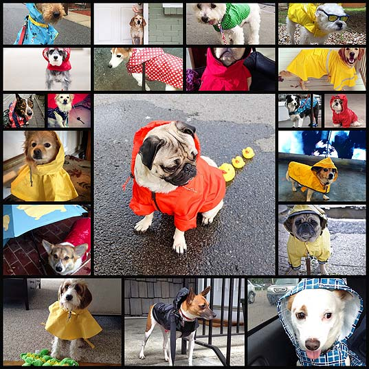 20-dogs-who-are-ready-to-weather-any-storm