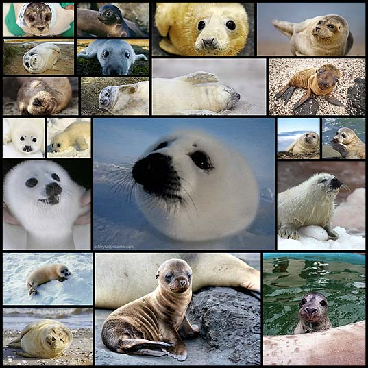 21-Sea-Puppies-Who-Love-You-Very-Much