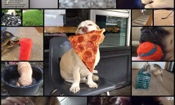 25-animal-vines-that-youll-just-want-to-watch-over-and-over