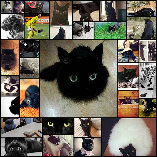 28-Reasons-To-Love-Black-Cats