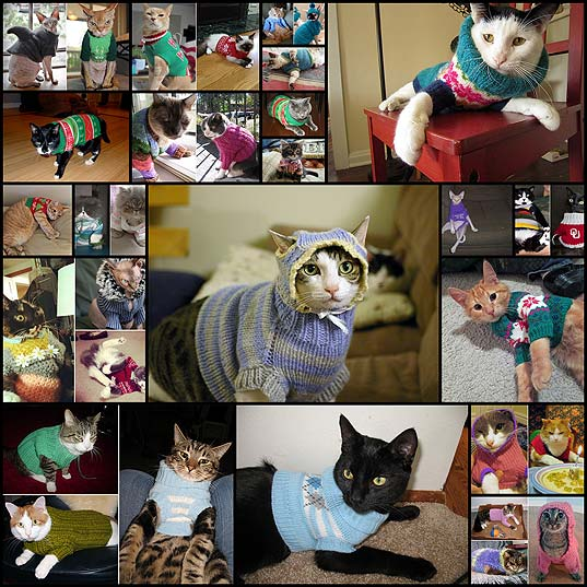 Cats-In-Sweaters
