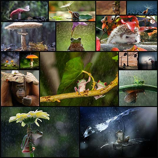 amazing-photos-of-animals-with-natural-umbrellas18