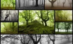 foggy-basque-forests-oskar-zapirain11