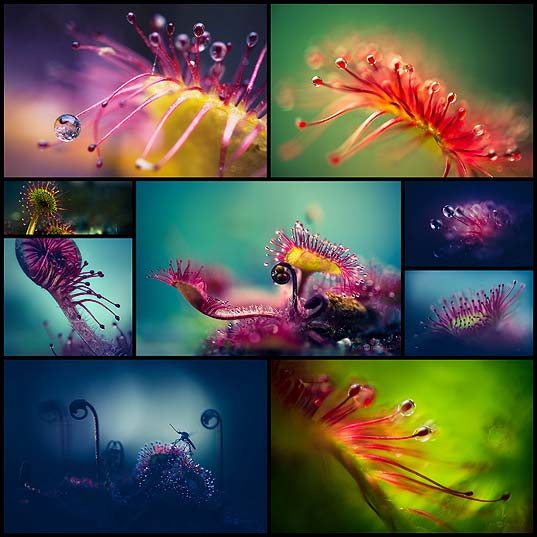 Joni-Niemelä's-Macro-Photographs-Capture-Carnivorous-Plants'-Alien-Like-Structures---OddPad