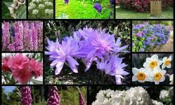 Цветы-убийцы--SuperCoolPics1