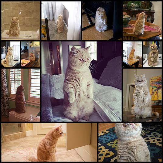 Adorable-Cat-Loves-Standing-on-Two-Legs-Like-a-Human---My-Modern-Met