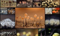 Alien-Forest-Amazing-Macro-Photography-of-Slime-Molds--Design-Swan