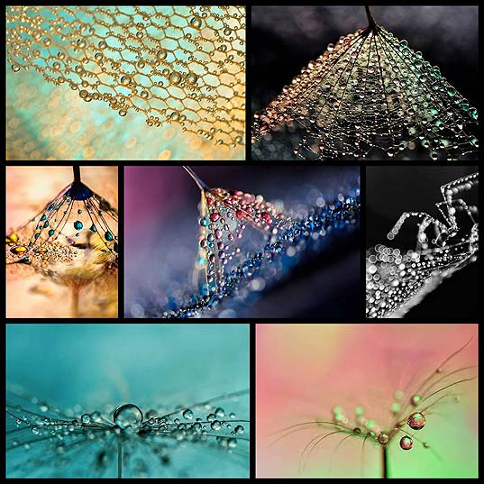 Water-Droplets-Undergo-a-Colorful-Metamorphosis-in-Macro-Photographs---My-Modern-Met