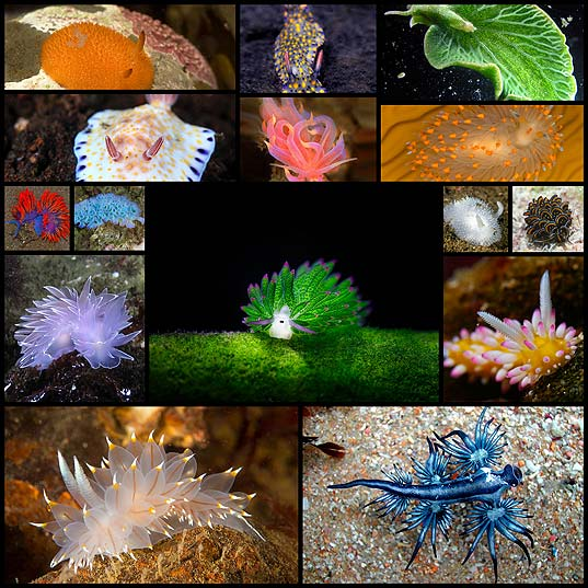 15+-Sea-Slugs-That-Prove-Aliens-Already-Live-On-Planet-Earth--Bored-Panda