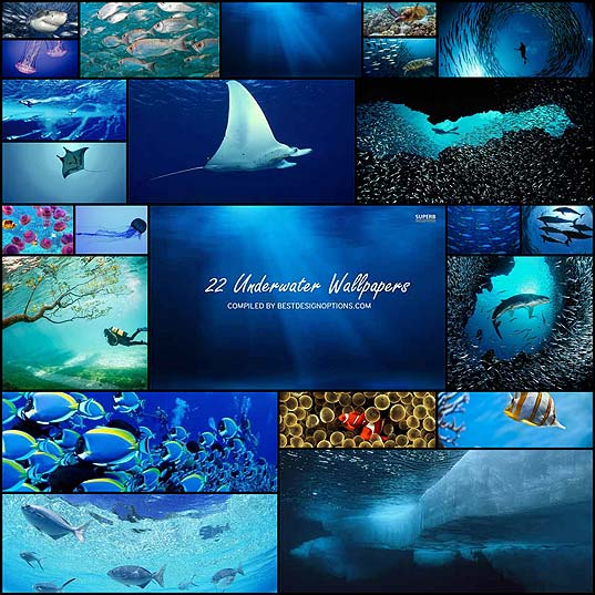 22-Amazing-Underwater-Wallpapers--Best-Design-Options
