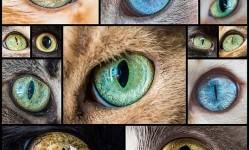 Mesmerizing-Macro-Photos-of-Cats'-Eyes-by-Andrew-Marttila---My-Modern-Met