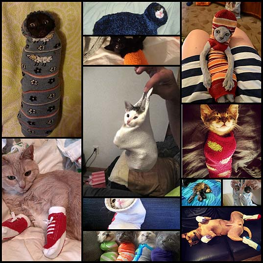 11-Deeply-Confused-Cats-In-Socks
