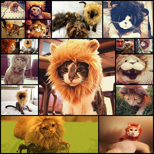 17-Cats-Who-Are-Clearly-Just-Lions