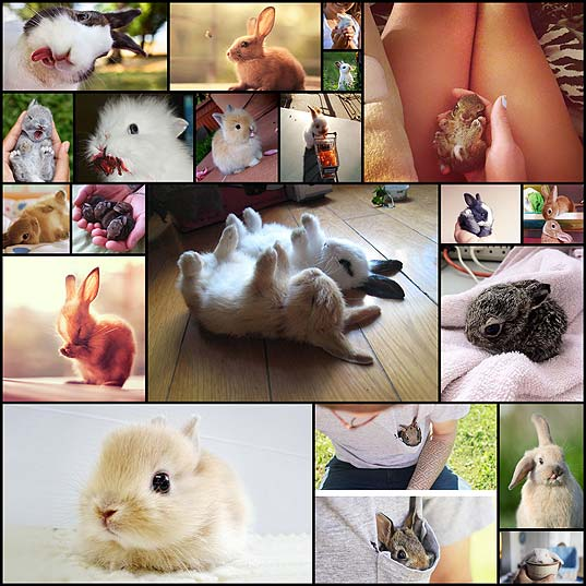 20+-Of-The-Cutest-Bunnies-Ever--Bored-Panda