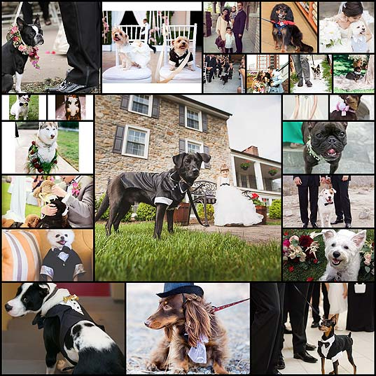 21-Adorable-Dogs-Who-Completed-The-Wedding-Day