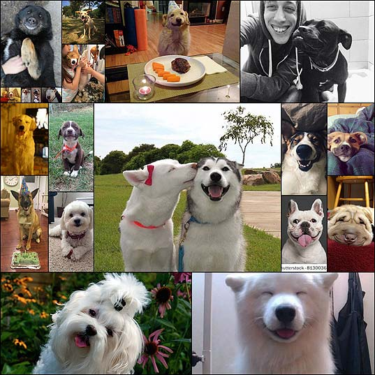 The-Internet's-Happiest-Dogs-Can't-Stop-Smiling