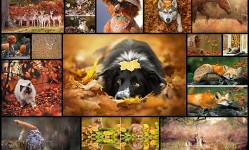 15+-Animals-Enjoying-Autumn-Magic--Bored-Panda