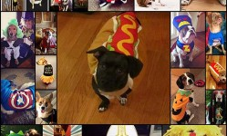 27-Dogs-That-Are-So-Ready-For-Halloween