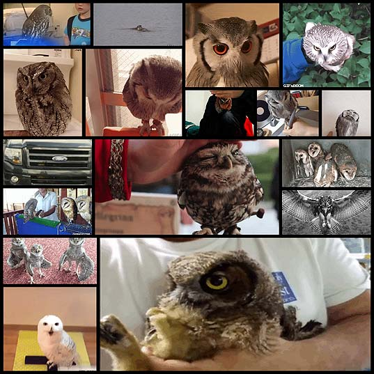 Owls-Are-Strange-But-Hilarious-Creatures-Creatures-(17-gifs)