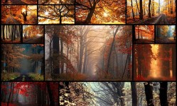 Dream-Like-Autumn-Forests-By-Czech-Photographer-Janek-Sedlář--Bored-Panda