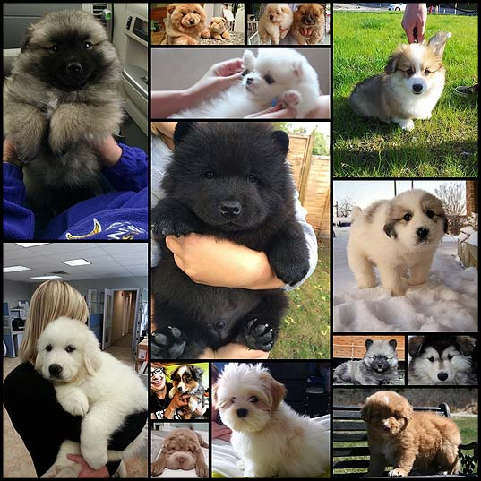 19-Dogs-Who-Are-Actual-Fuzz-Buckets