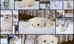 Животные,-которые-видят-снег-впервые-в-жизни