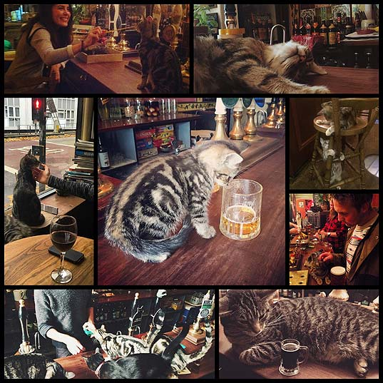 There's-A-Cat-Pub-In-The-UK-You-Need-To-Visit-Right-Meow--Bored-Panda