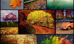 15-Awesome-fall-wallpapers-to-get-you-in-the-spirit-•-Inspired-Magazine