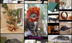 15-Gift-Ideas-For-Cats