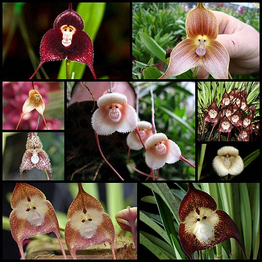 Crowds-Flock-to-Japan-to-View-Orchid-Species-Resembling-a-Monkey's-Friendly-Face---My-Modern-Met
