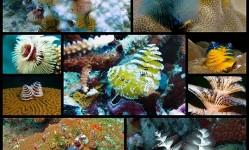 Festive-Underwater-Creatures-Look-Like-Mini-Christmas-Trees---My-Modern-Met