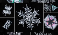 Photographer-Spent-2,500-Hours-Capturing-Stunning-Photos-of-Complex-Snowflakes---My-Modern-Met