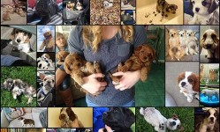 The-37-Most-Important-Puppy-Pictures-Of-2015