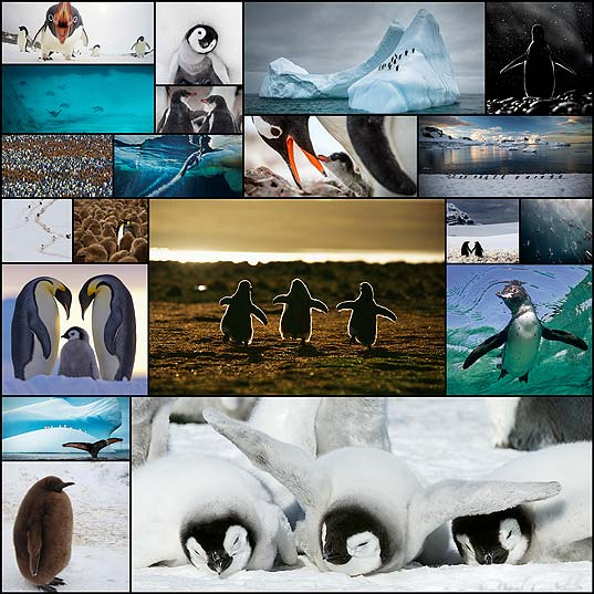 20-Beautiful-Pics-To-Celebrate-Penguin-Awareness-Day--Bored-Panda