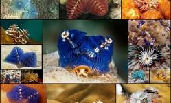 Самые-новогодние-морские-черви