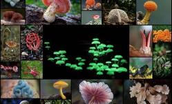 Грибное-царство---34-дивных-фотографий