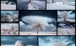 11The-Majestic-Beauty-Of-Trees-In-Poland-Captured-In-Infrared-Photography--Bored-Panda
