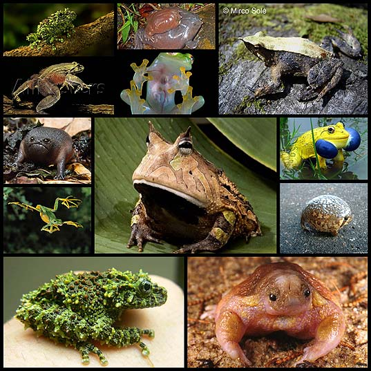 15-Weird-Looking-Frogs-Around-World--Design-Swan