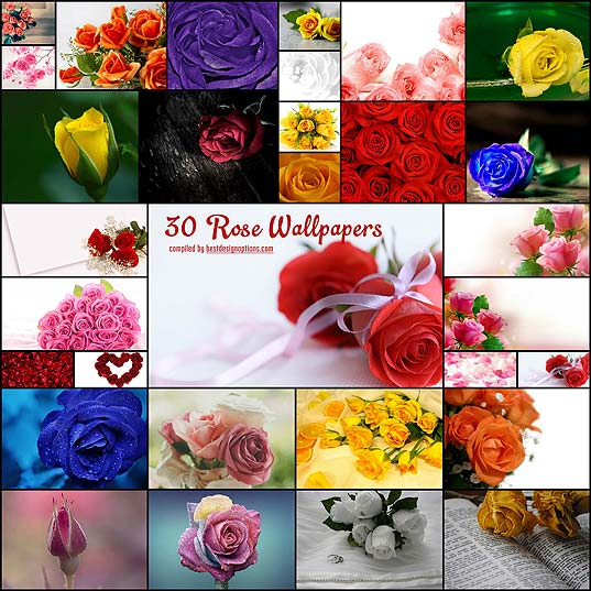 30-Rose-Wallpapers-for-Your-Desktops--Best-Design-Options