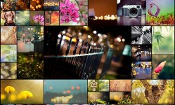 40-Beautiful-Examples-of-Bokeh-Photography