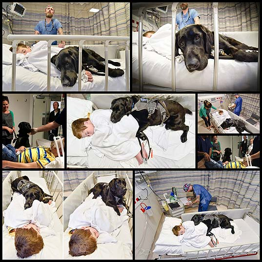 Boy's-Loyal-Dog-Refused-To-Let-Him-Go-Into-Surgery-Alone