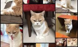 Коюки---новый-хмурый-кот-покоривший-пользователей-сети