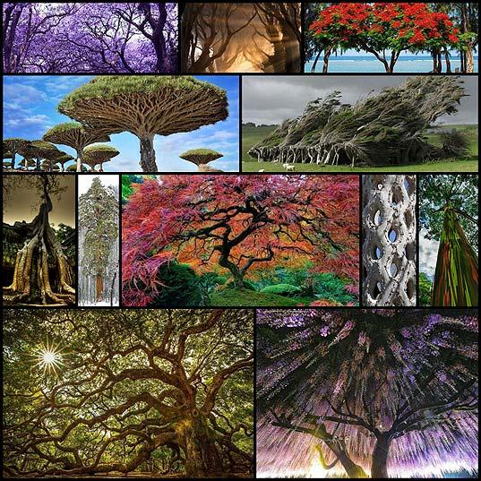 12-самых-красивых-и-удивительных-деревьев-на-Земле