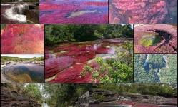 Каньо-Кристалес-—-самая-красивая-река-на-Земле