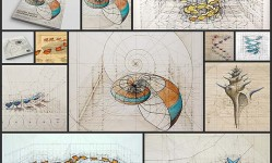 Coloring-Book-Celebrates-Mathematical-Beauty-of-Nature-with-Hand-Drawn-Golden-Ratio-Illustrations---My-Modern-Met
