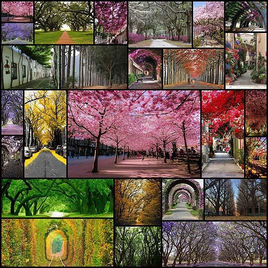 Потрясающе-красивые-улицы-в-тени-садов-и-деревьев