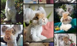 Adorable-Fluffy-Eared-Rabbit-Looks-Like-a-Living-Doll---My-Modern-Met