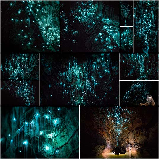 Glow-Worms-Turn-New-Zealand-Cave-Into-Starry-Night-And-I-Spent-Past-Year-Photographing-It--Bored-Panda